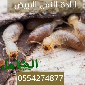 ارخص شركة مكافحة النمل الابيض بالدمام