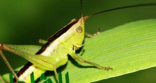 شركة رش حشرات بالدمام بضمان