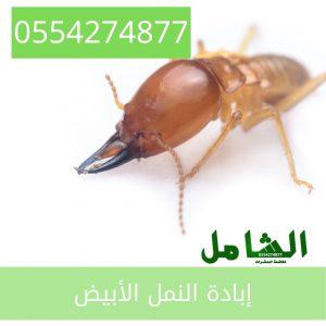 رقم شركة مكافحة النمل الابيض بالدمام