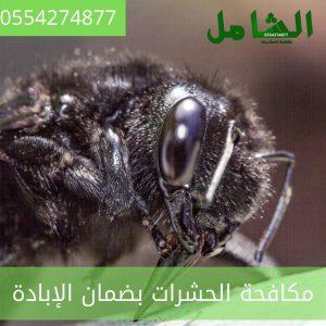 رقم شركة مكافحة حشرات بالخبر